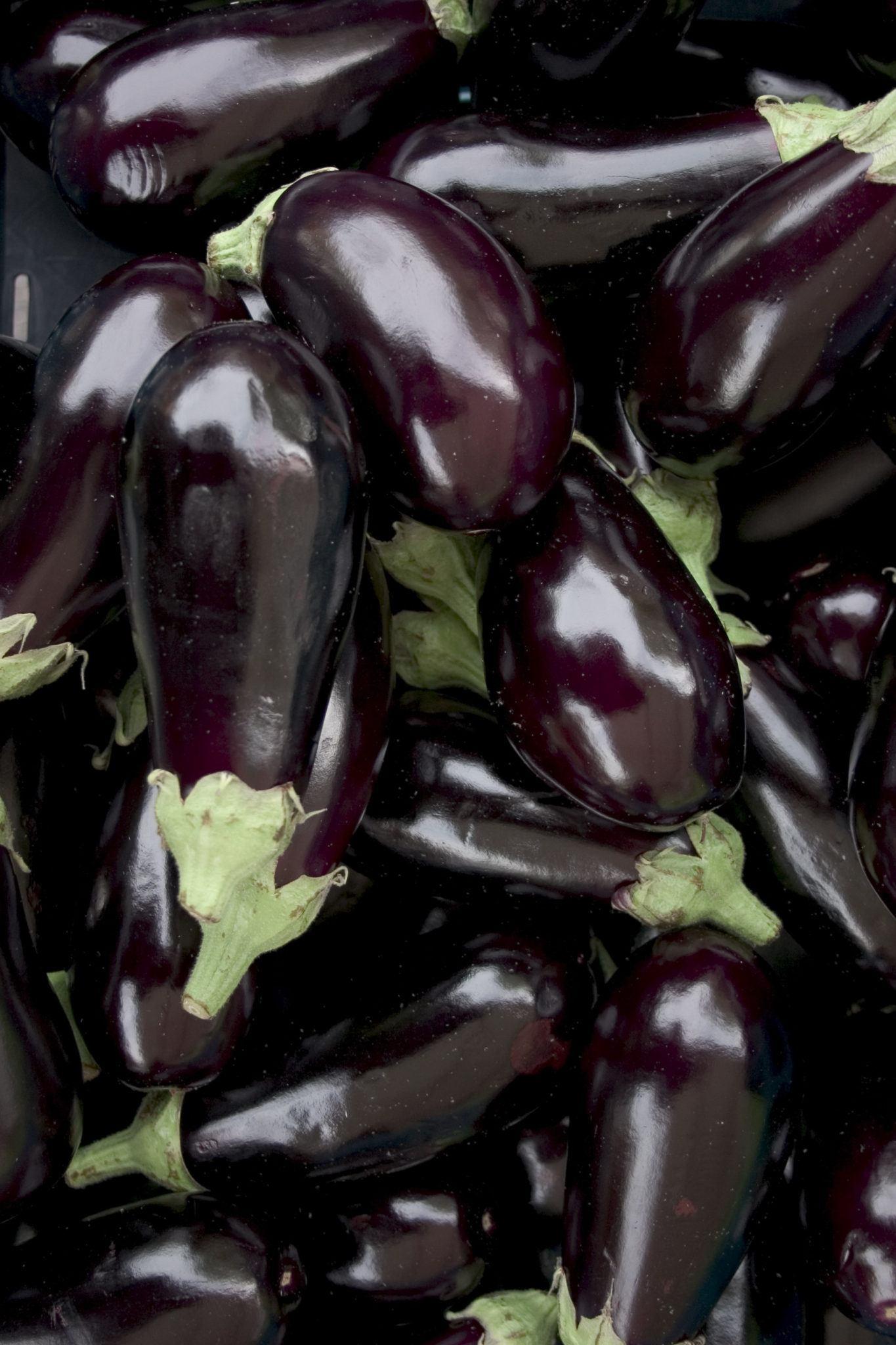 Graines et semences bio d'aubergines violettes longues 1