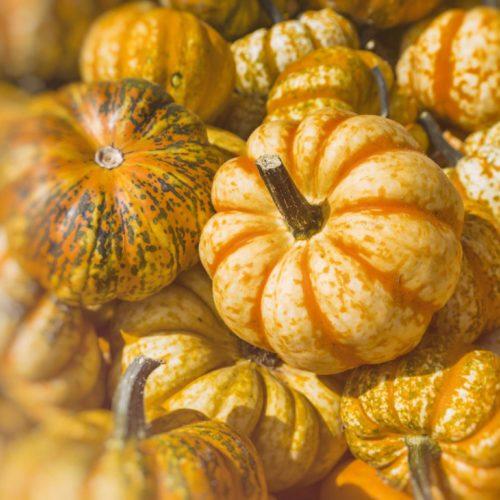 Graines et semences biologiques de courge muscade de Provence