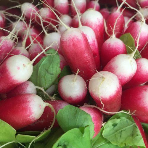 Semences et graines bio de radis flamboyant