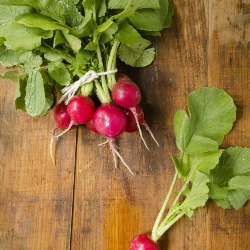 Graines et semences bio de radis rond rouge à petit bout blanc
