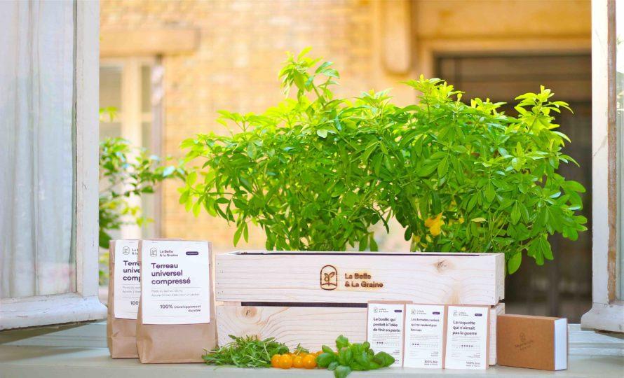 Semences et graines bio de Salades
