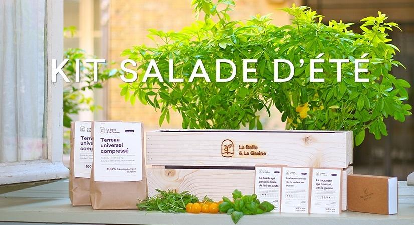 Graine et semence bio de salade d'été