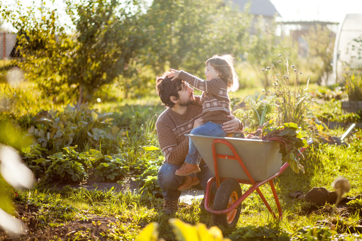 Père et fille qui jardinent et récoltent des légumes, dans leur jardin en été