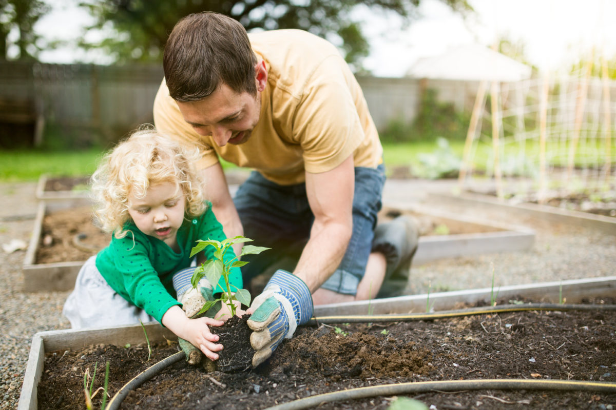 Plantation de légumes bio