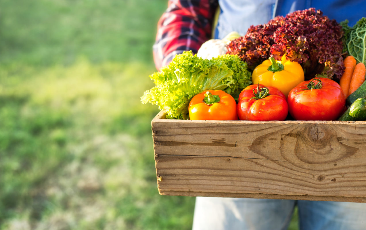 Légumes bio récoltés en août