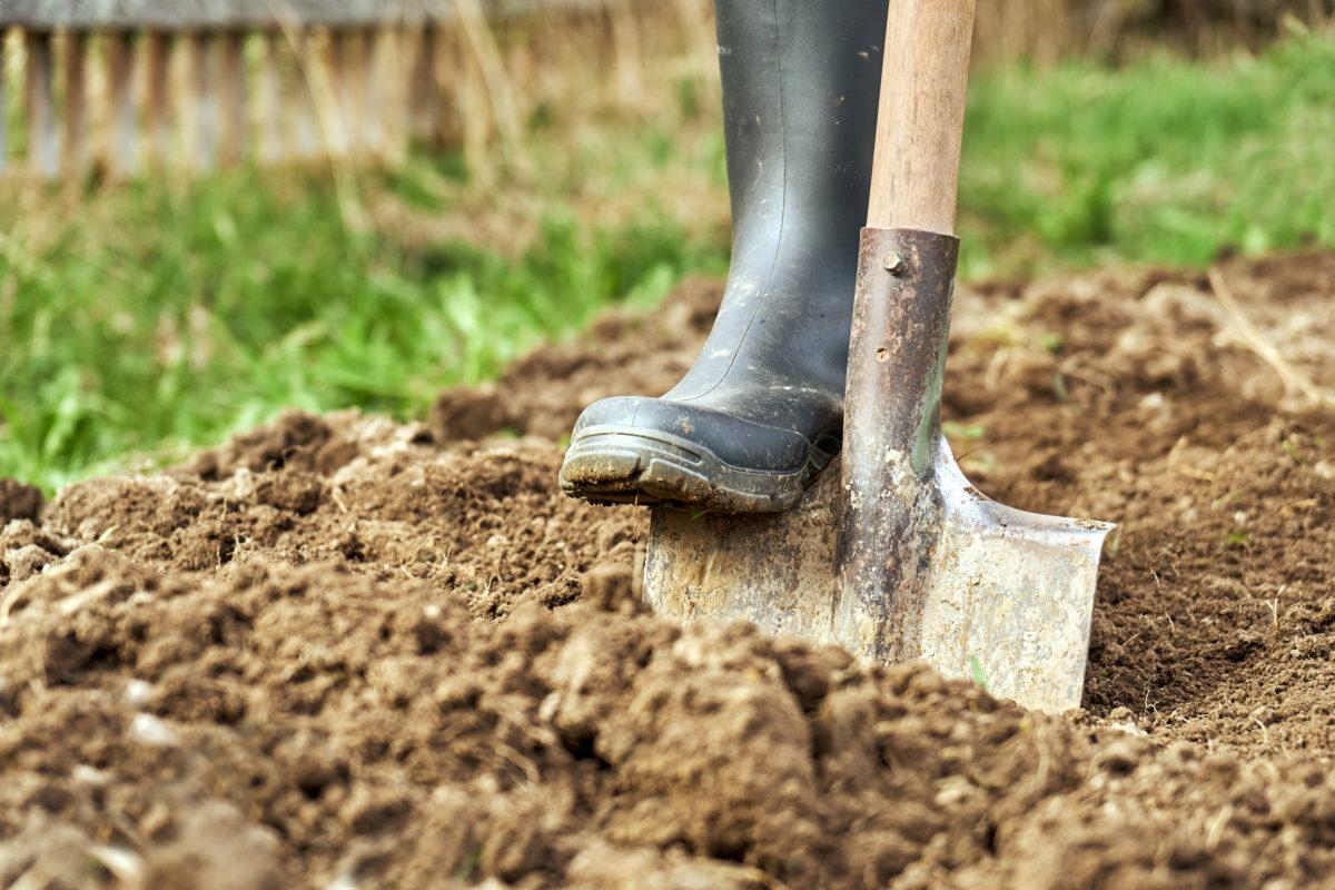 Travail de la terre dans le jardin à l'aide d'une pelle