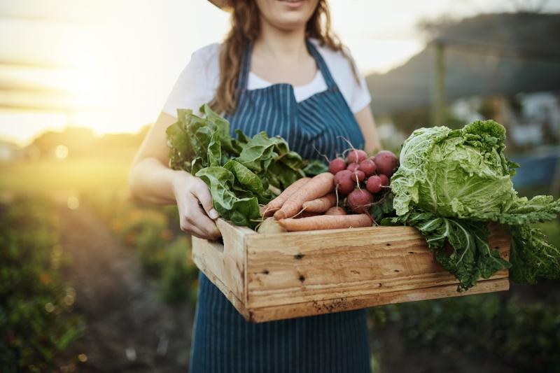 Récolte de légumes bio