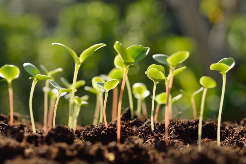 Plants d'aromates bio